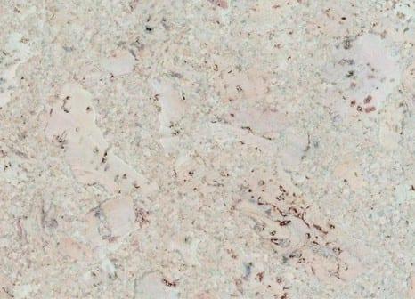 Korkboden weiß  Korkboden günstig kaufen bei Raumtrend Hinze | Raumtrend Hinze